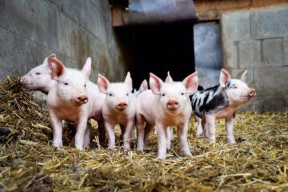Thermo Anwendungen Tierhaltung